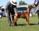 Sadiki (with Judge Mr Greg Eva) at 2010 National where Sadiki placed 3rd (from 8 entries)